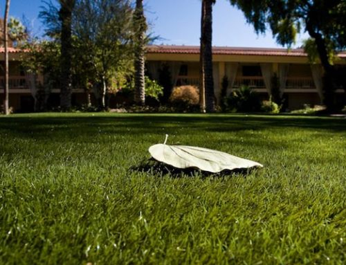 3 Reasons You'll Wish You Had Artificial Grass in New Mexico this Fall